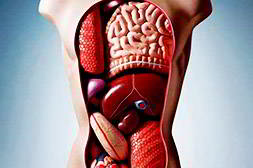 Алколок восстанавливает поврежденные органы