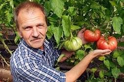 С бифогумом вы будете собирать урожай три раза в год