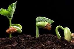 Создают условия для быстрого прорастания семян ампулы КорнеМакс.